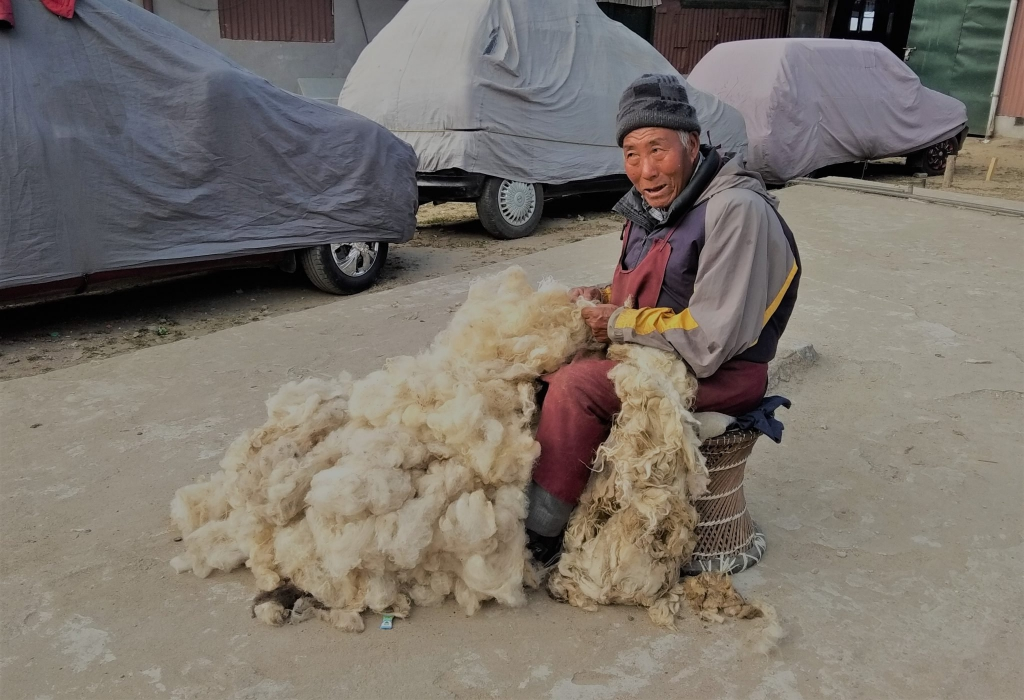 Wool Herding Process